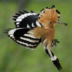 Birds of the Estate